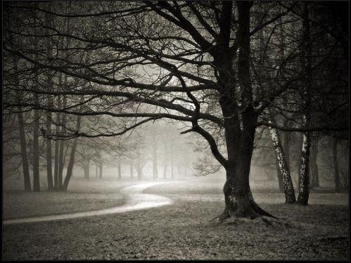 Pathway-Black & White