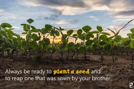 Always be ready to plant a seed and to reap one that was sown by your brother