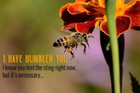 I have humbled you - I know you feel the sting right now, but it's necessary...