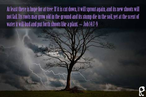 At least there is hope for at tree: If it is cut down, it will sprout again, and its new shoots will not fail. Its roots may grow old in the ground and its stump die in the soil, yet at the scent of water it will bud and put forth shoots like a plant. ~ Job 14:7-9